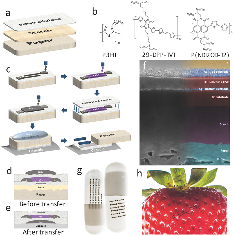 Tattoo-Paper Transfer as a Versatile Platform for All-Printed Organic Edible Electronics